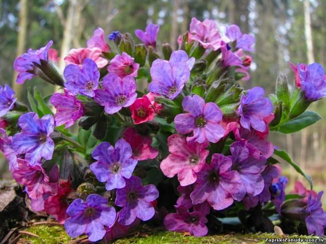 какие цветы цветут весной