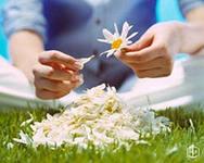 суеверия и мифы о комнатных цветах