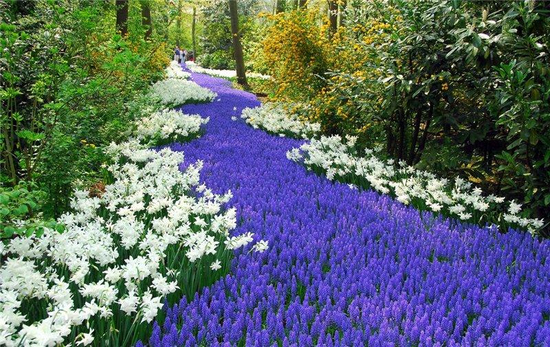 цветочный массив