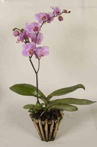 orhidey