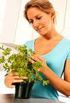 Как комнатные растения влияют на нашу жизнь