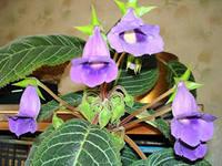 энергия растений