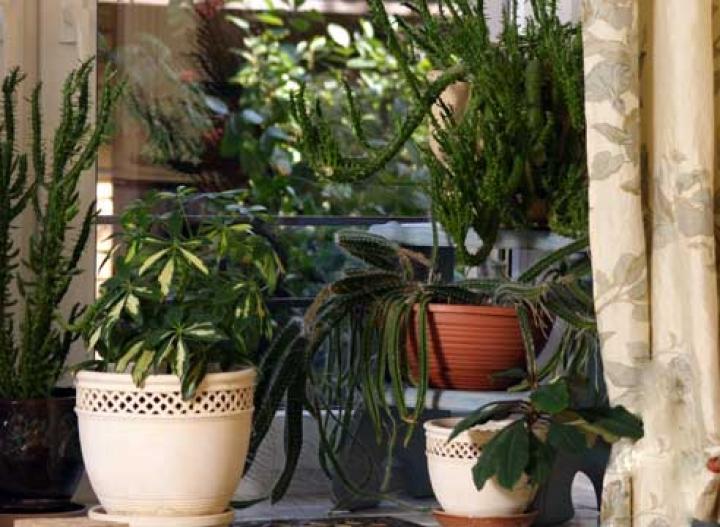 уход за комнатными растениями в жару