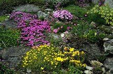 растения для альп1