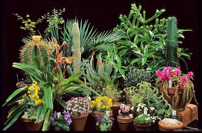 семейства комнатных растений