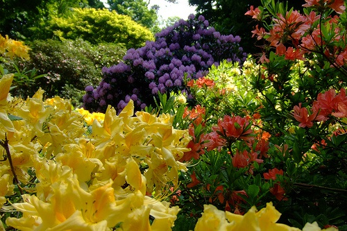 Тенелюбивые многолетние цветы