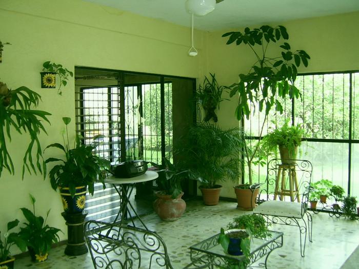 Декоративное цветоводство озеленение монсарды и прихожей