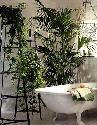 Декоративное цветоводство ванная комната растительный дизаайн и озеленение