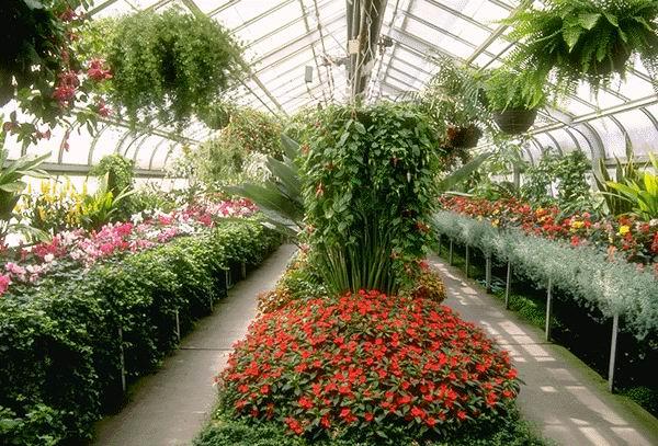 цветы для теплицы
