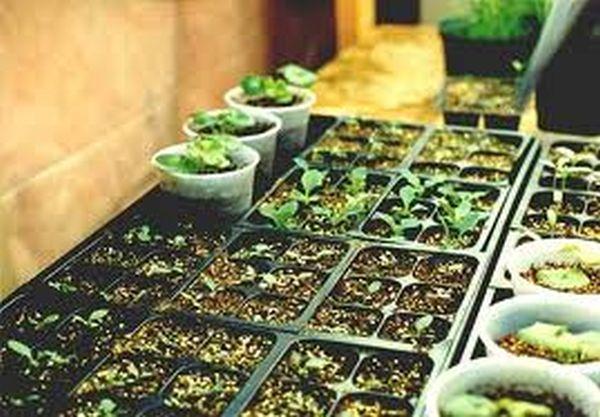 сеять семена в грунт
