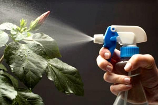 выращивание комнатных растений