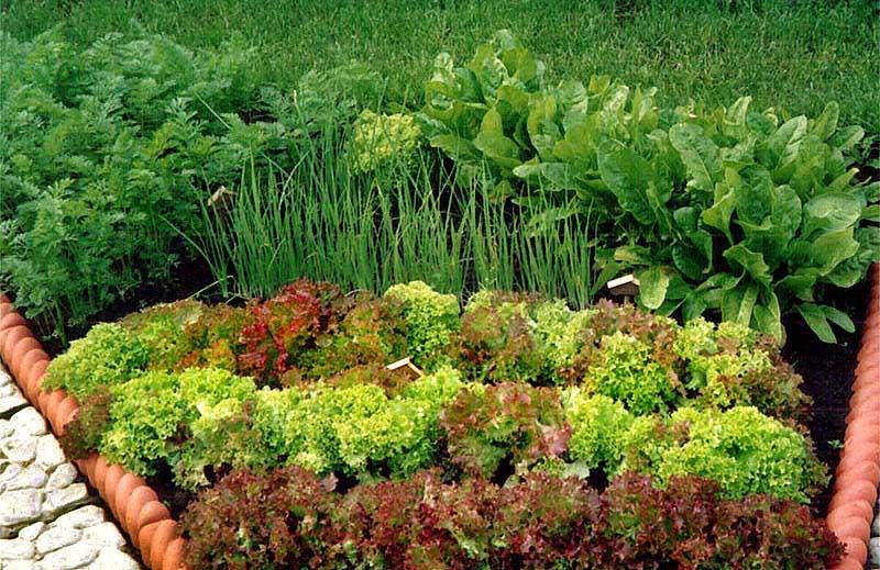 севооборот овощных культур таблица