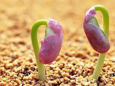 почему не всходят семена