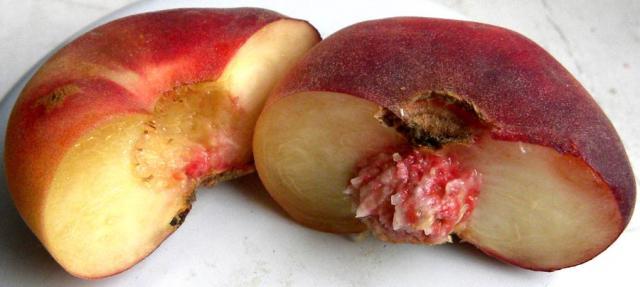 Инжирный персик выращивание