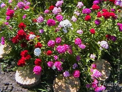 цветушие в июне