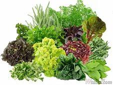 неприхотливые овощи