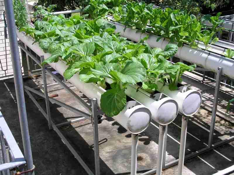 Выращивание растений гидропоники