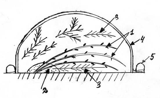 гортензия садовая зимой