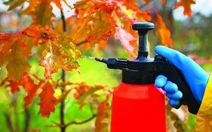 чем опрыскивать деревья осенью