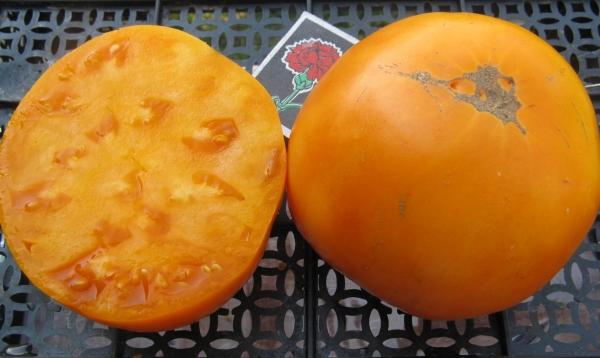 желтые помидоры медовый гигант
