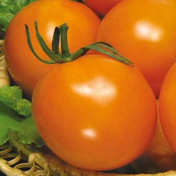 желтые помидоры апельсин