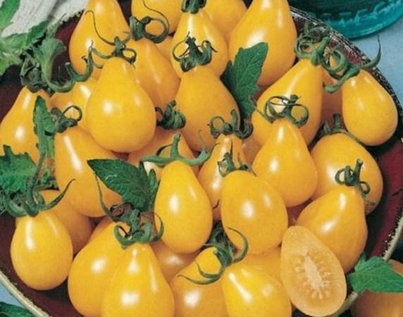 желтые помидоры медовая капля