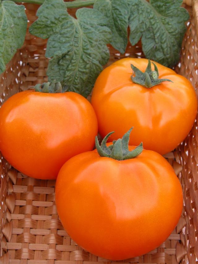 желтые помидоры зеро