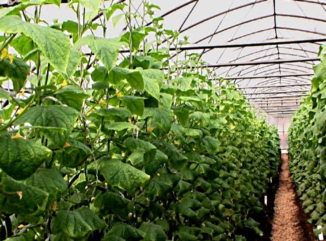 биопрепараты для защиты растений