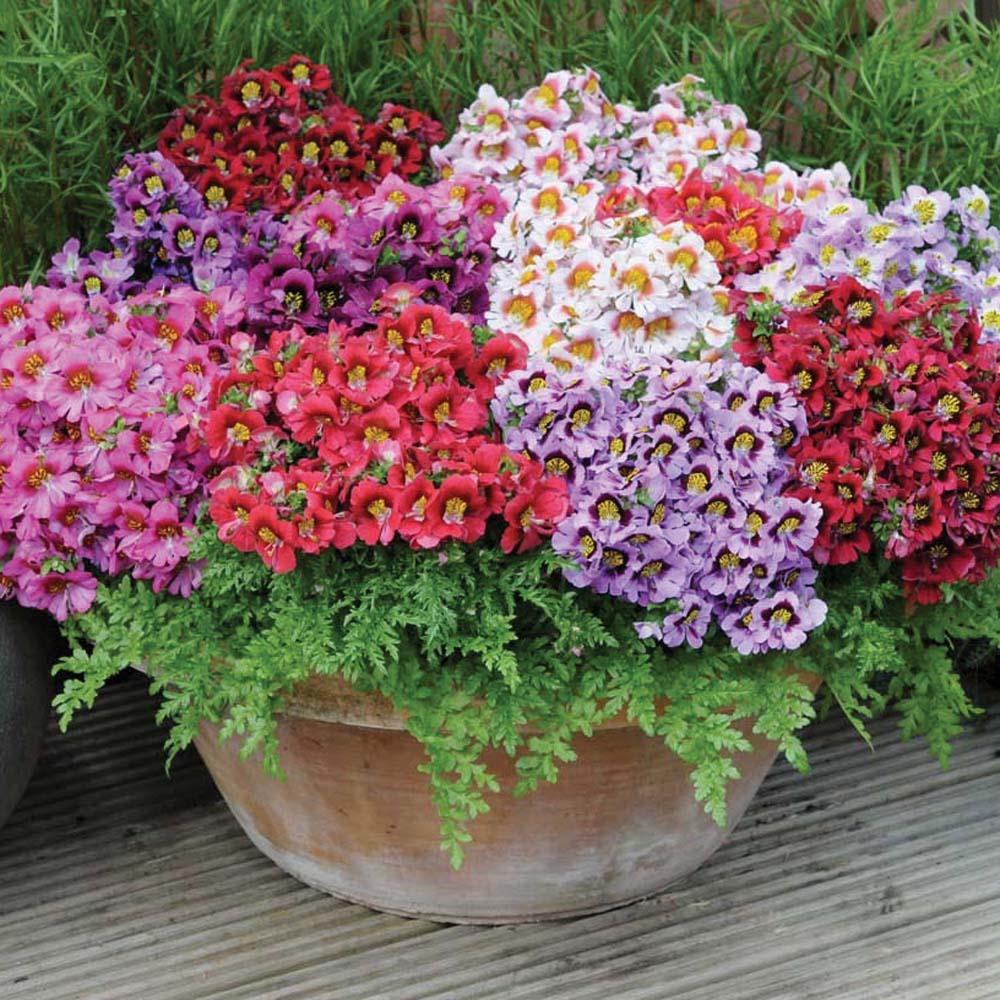 Очень красивые однолетние цветы