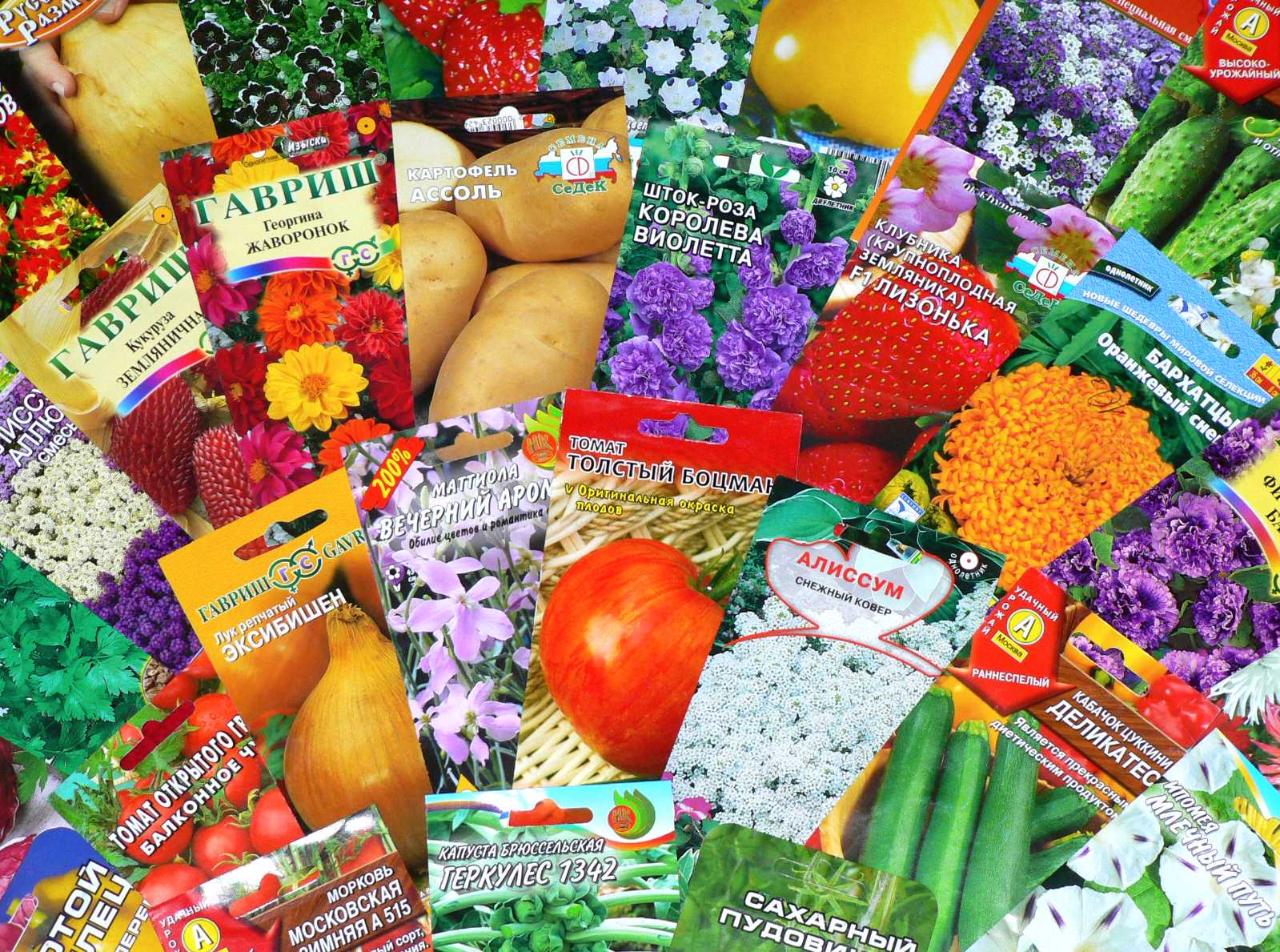интернет магазин семян