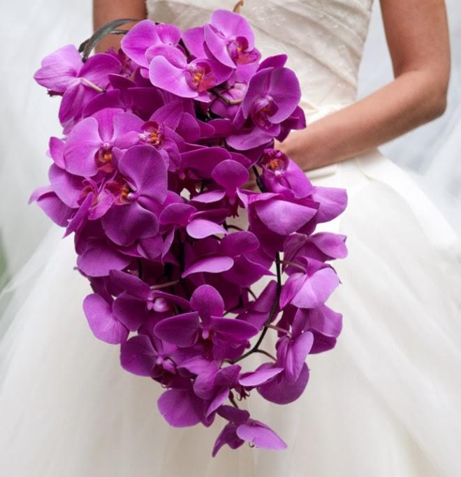 орхидею можно