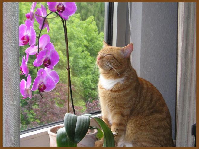 Можно ли дома держать орхидеи